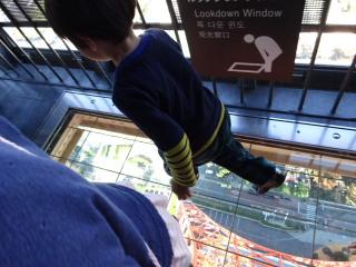 Lookdown Windowを歩くテラ太