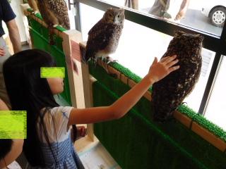 フクロウを触るテラ美