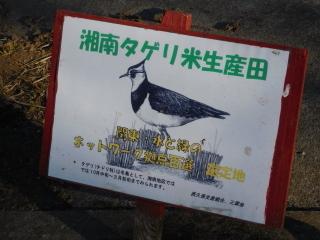 湘南タゲリ米生産田の看板