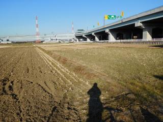 湘南タゲリ米生産田