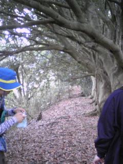 三浦アルプス ドングリ並木